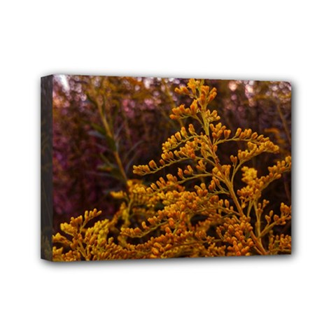 Goldenrod Version Ii Mini Canvas 7  X 5  (stretched)