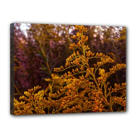 Goldenrod Version Ii Canvas 16  X 12  (stretched)