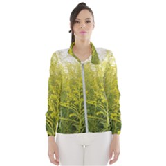 Yellow Goldenrod Women s Windbreaker