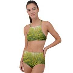Yellow Goldenrod High Waist Tankini Set