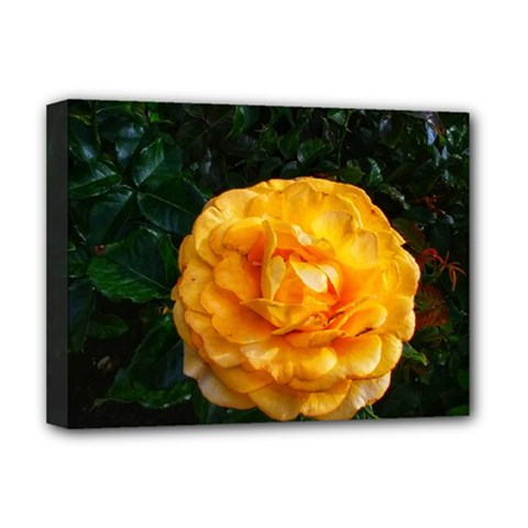 Yellow Rose Deluxe Canvas 16  X 12  (stretched)