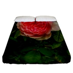 Complex Pink Rose Fitted Sheet (queen Size)
