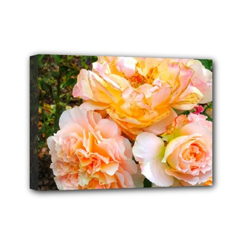 Bunch Of Orange And Pink Roses Mini Canvas 7  X 5  (stretched)
