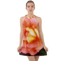 Light Orange And Pink Rose Halter Tie Back Chiffon Dress