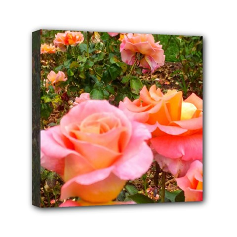 Pink Rose Field Mini Canvas 6  X 6  (stretched)