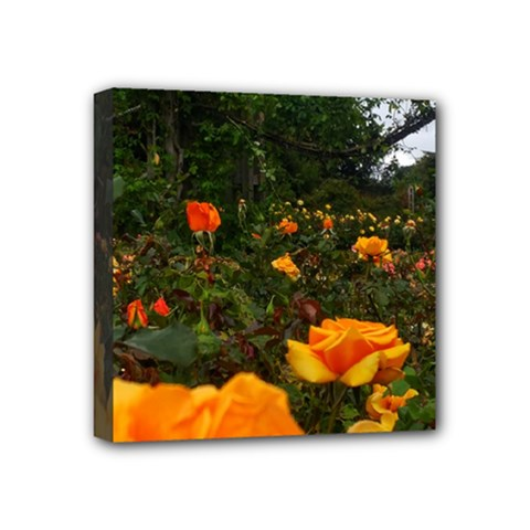 Orange Rose Field Mini Canvas 4  X 4  (stretched)