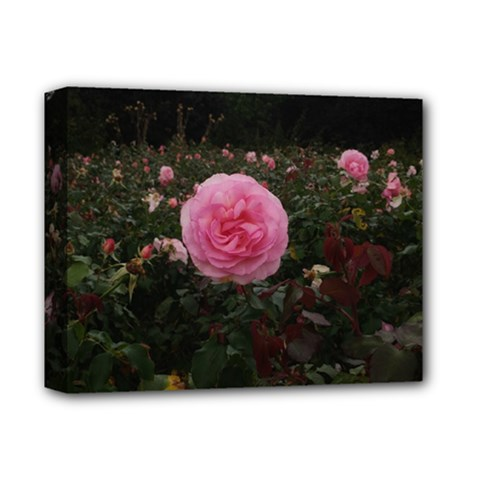 Pink Rose Field Ii Deluxe Canvas 14  X 11  (stretched)