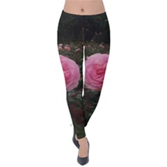 Pink Rose Field Ii Velvet Leggings
