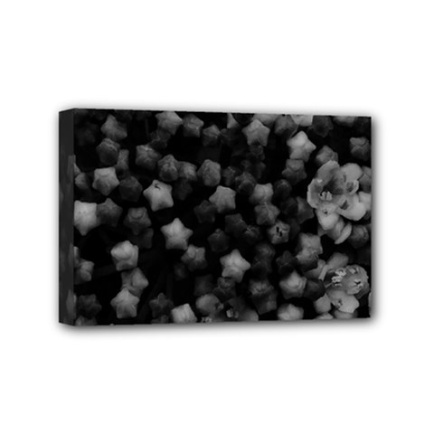 Floral Stars  Black And White, High Contrast Mini Canvas 6  X 4  (stretched)