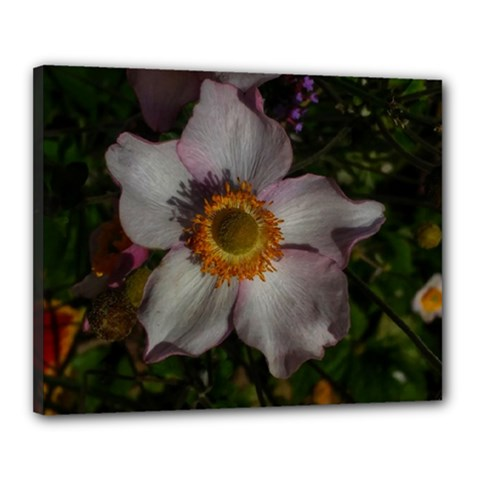 Light Purple Blossoms Canvas 20  X 16  (stretched)