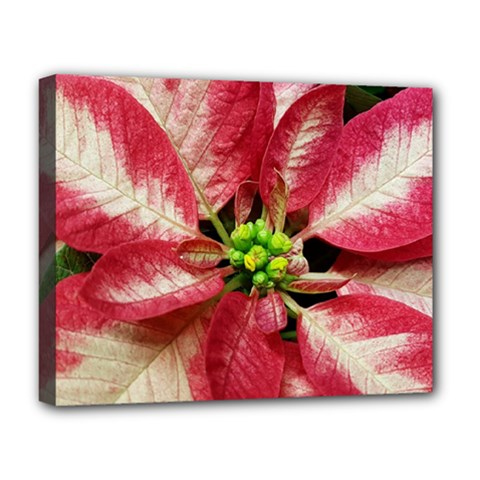 Christmas Poinsettia Deco Jewellery Deluxe Canvas 20  X 16  (stretched)