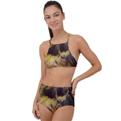 Wing Feather Bird Animal World High Waist Tankini Set by Pakrebo