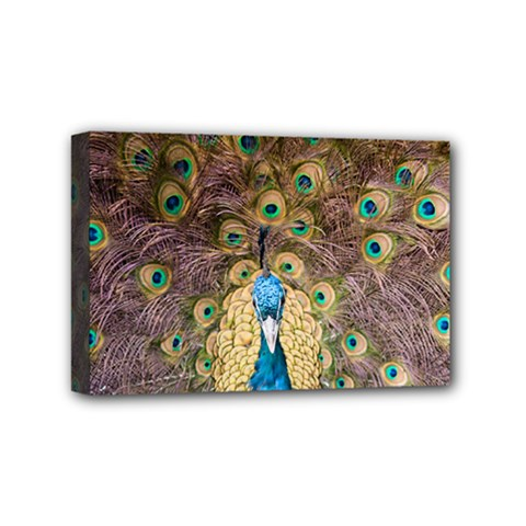 Bird Peacock Feather Mini Canvas 6  X 4  (stretched)
