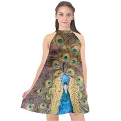 Bird Peacock Feather Halter Neckline Chiffon Dress