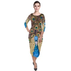 Bird Peacock Feather Quarter Sleeve Midi Velour Bodycon Dress by HermanTelo