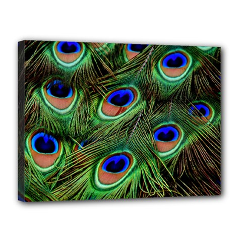 Peacock Feathers Plumage Iridescent Canvas 16  X 12  (stretched)