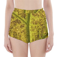 Leaf Structure Texture Background High Waisted Bikini Bottoms