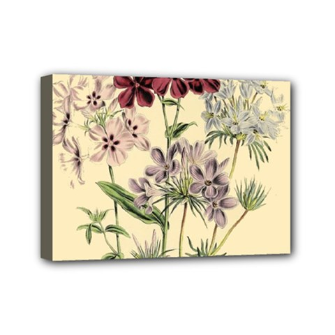 Botanical Print Antique Flora Plant Mini Canvas 7  X 5  (stretched) by Pakrebo