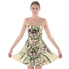 Botanical Print Antique Natural Strapless Bra Top Dress