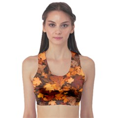 Fall Foliage Autumn Leaves October Sports Bra
