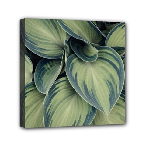 Closeup Photo Of Green Variegated Leaf Plants Mini Canvas 6  X 6  (stretched) by Pakrebo