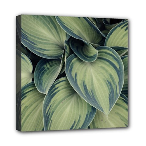 Closeup Photo Of Green Variegated Leaf Plants Mini Canvas 8  X 8  (stretched) by Pakrebo