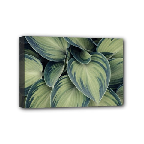 Closeup Photo Of Green Variegated Leaf Plants Mini Canvas 6  X 4  (stretched) by Pakrebo