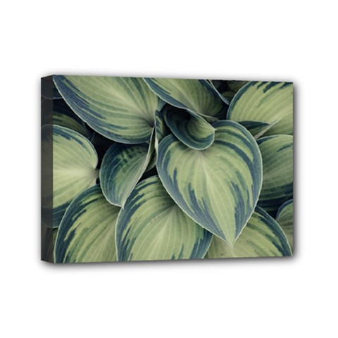 Closeup Photo Of Green Variegated Leaf Plants Mini Canvas 7  X 5  (stretched) by Pakrebo