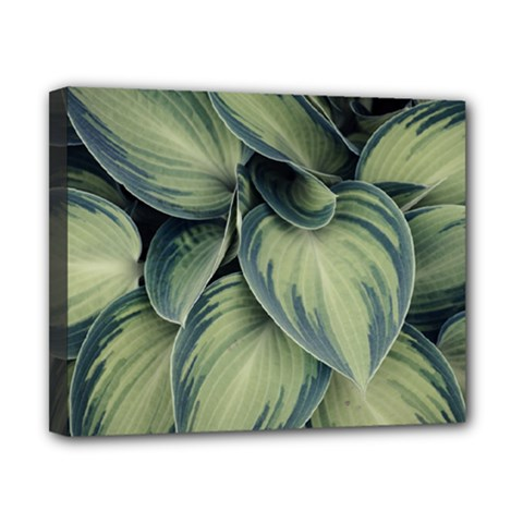 Closeup Photo Of Green Variegated Leaf Plants Canvas 10  X 8  (stretched) by Pakrebo