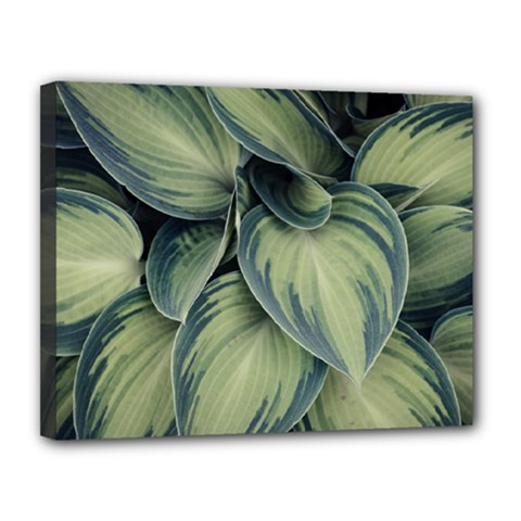 Closeup Photo Of Green Variegated Leaf Plants Canvas 14  X 11  (stretched) by Pakrebo