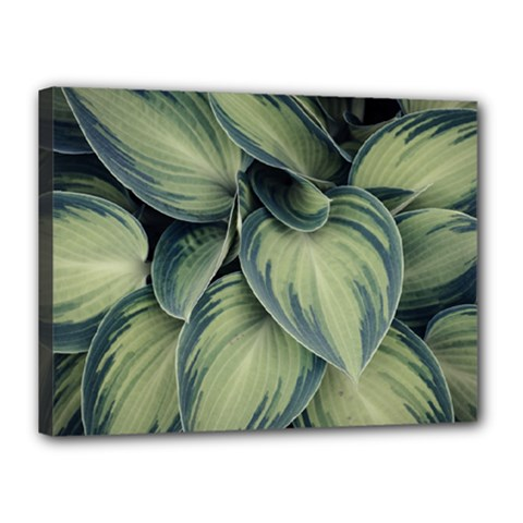 Closeup Photo Of Green Variegated Leaf Plants Canvas 16  X 12  (stretched) by Pakrebo