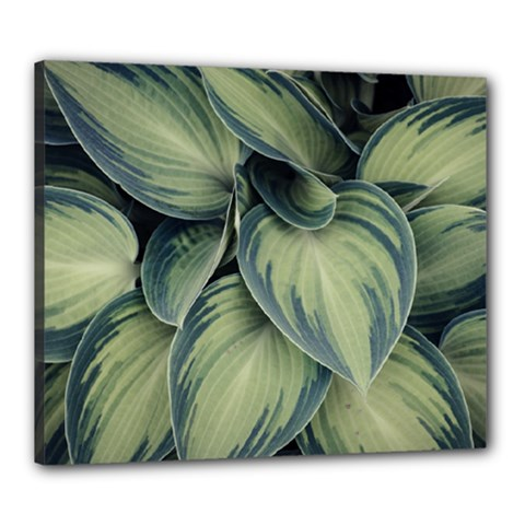 Closeup Photo Of Green Variegated Leaf Plants Canvas 24  X 20  (stretched) by Pakrebo