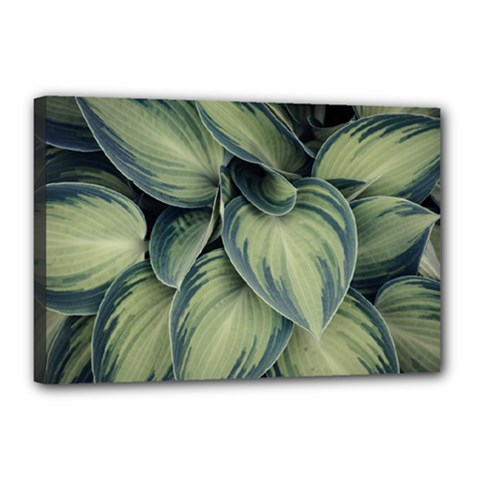 Closeup Photo Of Green Variegated Leaf Plants Canvas 18  X 12  (stretched) by Pakrebo