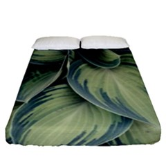 Closeup Photo Of Green Variegated Leaf Plants Fitted Sheet (queen Size)