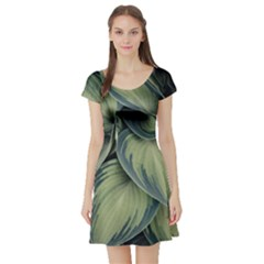 Closeup Photo Of Green Variegated Leaf Plants Short Sleeve Skater Dress by Pakrebo