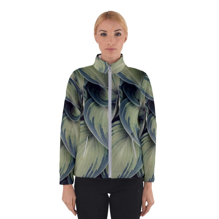 Closeup Photo Of Green Variegated Leaf Plants Winter Jacket