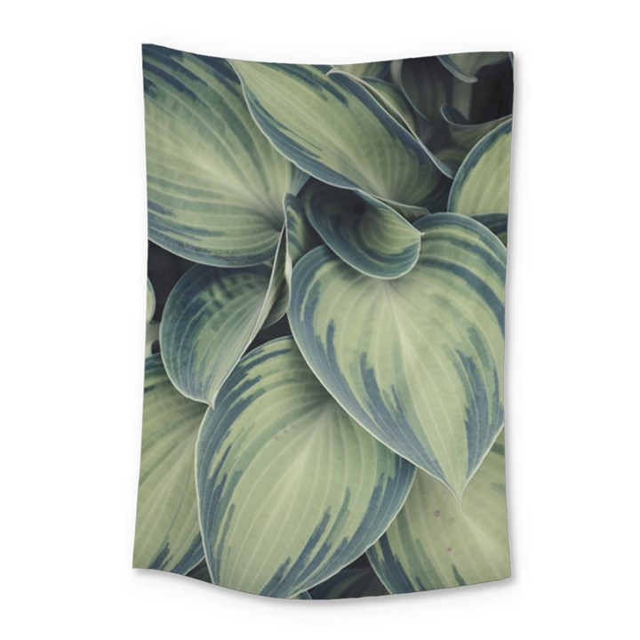 Closeup Photo Of Green Variegated Leaf Plants Small Tapestry