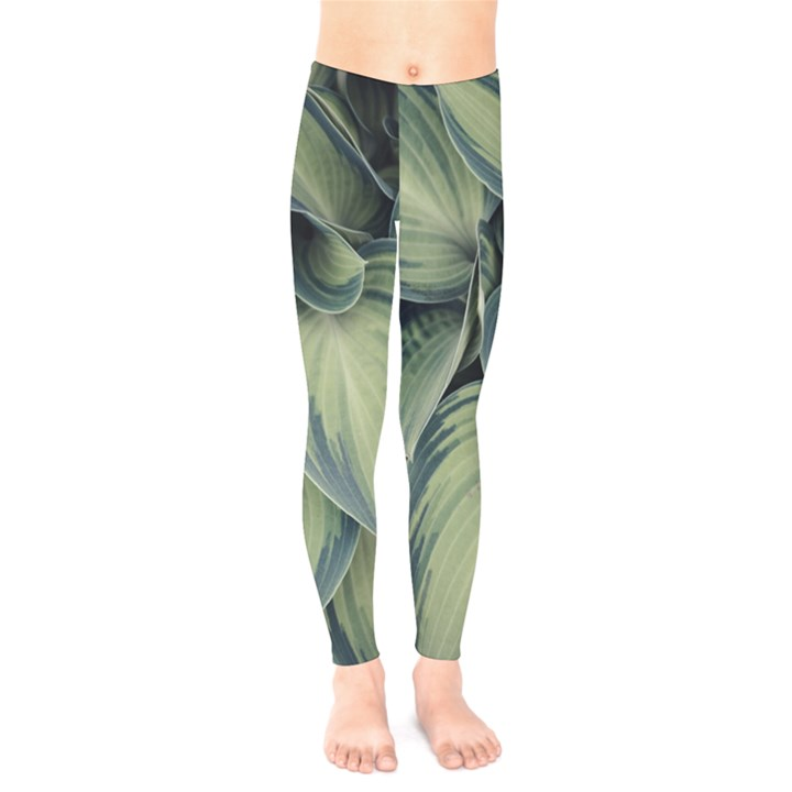 Closeup Photo Of Green Variegated Leaf Plants Kids  Legging