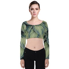 Closeup Photo Of Green Variegated Leaf Plants Velvet Long Sleeve Crop Top by Pakrebo