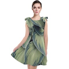 Closeup Photo Of Green Variegated Leaf Plants Tie Up Tunic Dress