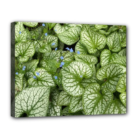 Green And White Leaf Plant Canvas 14  X 11  (stretched)