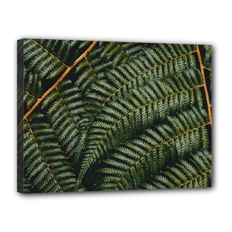 Green Leaves Photo Canvas 16  X 12  (stretched)