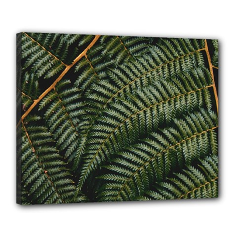 Green Leaves Photo Canvas 20  X 16  (stretched)