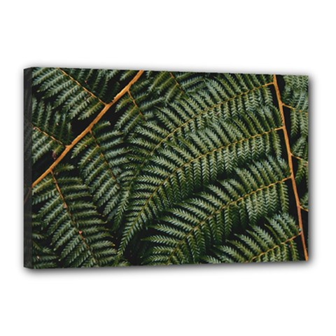 Green Leaves Photo Canvas 18  X 12  (stretched)