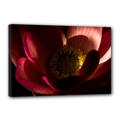 Zappwaits Water Lily Canvas 18  X 12  (stretched) by zappwaits