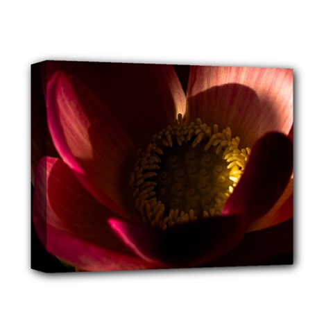 Zappwaits Water Lily Deluxe Canvas 14  X 11  (stretched)