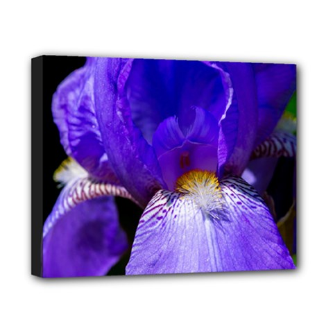 Zappwaits Flower Canvas 10  x 8  (Stretched)