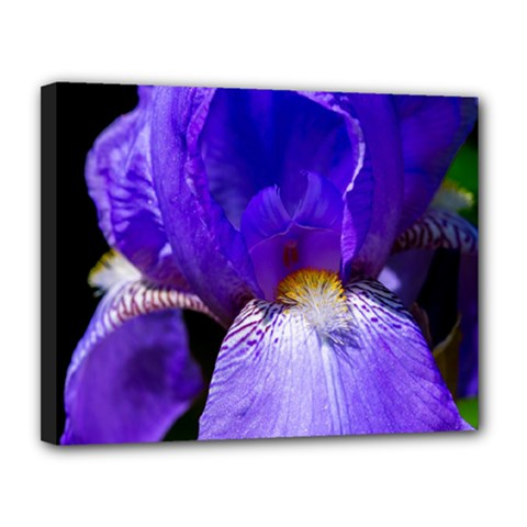Zappwaits Flower Canvas 14  x 11  (Stretched)