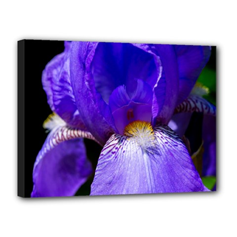 Zappwaits Flower Canvas 16  x 12  (Stretched)