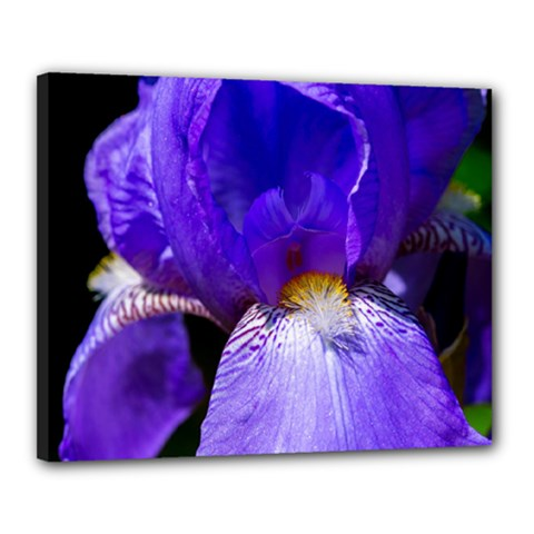 Zappwaits Flower Canvas 20  x 16  (Stretched)